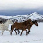 caballos salvajes corriendo